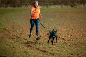 Women in orange t shirt green leggings attached to her dog by a waist belt being pulled up a field Canicross